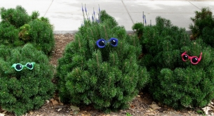 Shrubs wear croshades.